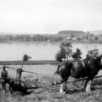 Horse drawn mower  at Farraline around 1930. Man on mower possibly Donald Williamson.