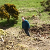 19 April John  about to tackle gorse roots removal.  Photograph courtesy of Alister Chisholm