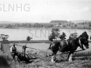 Horse drawn mower