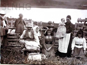 Shearing at Dalcrombie in 1899