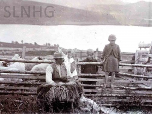 Shearing at Dalcrombie in 1899.