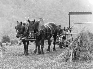 Ballaggan Harvest c 1920