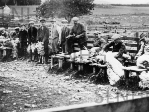 Sheep shearers at Gorthleck Mains around 1930
