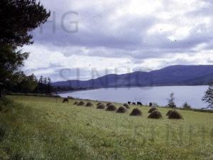 Lochgarthside  Hay Ricks c 1960.  .