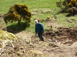 19 April John  about to tackle gorse roots removal.