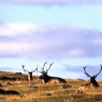 Natural History & Environment